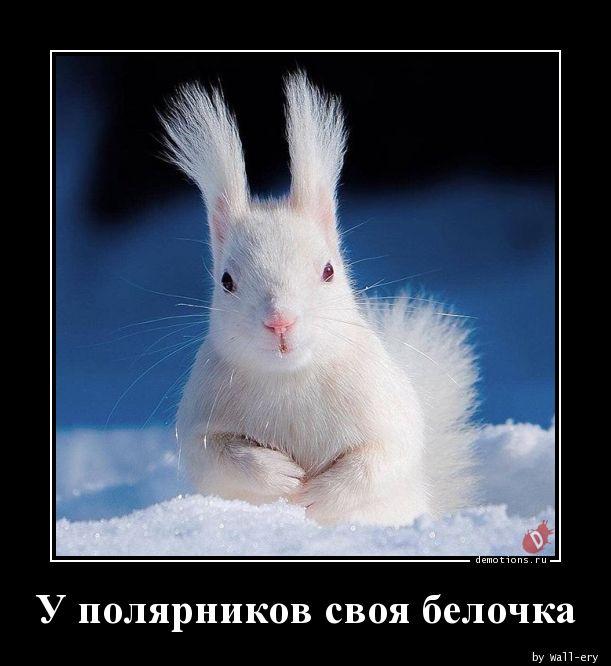 У полярников своя белочка