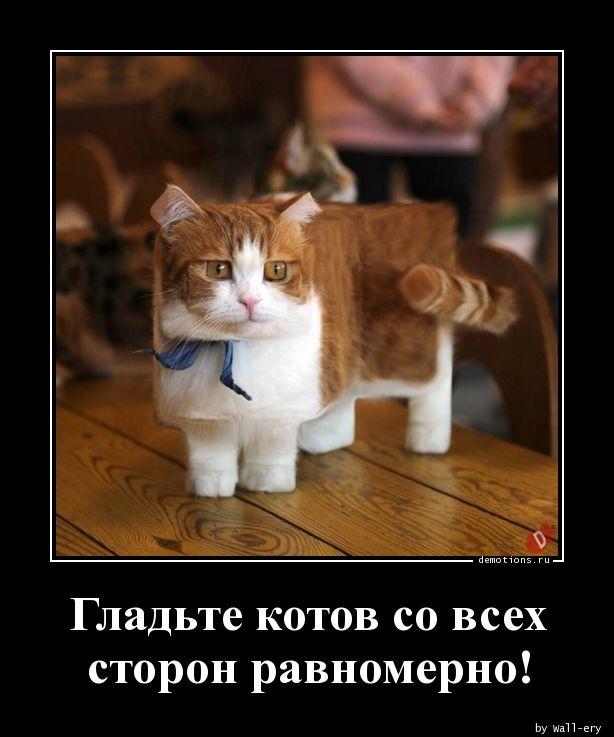 Гладьте котов со всех сторон равномерно!