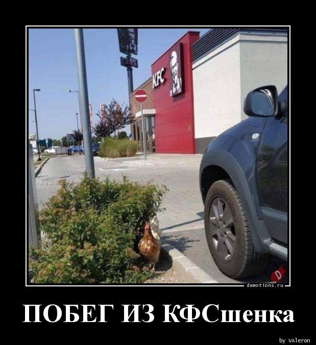 ПОБЕГ ИЗ КФСшенка
