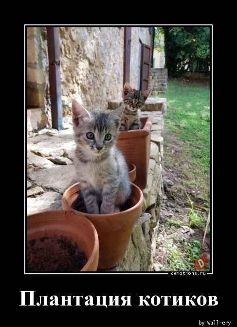 Плантация котиков