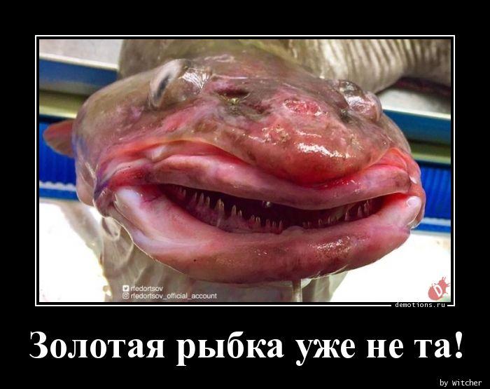 Золотая рыбка уже не та!