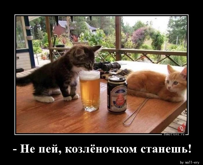 - Не пей, козлёночком станешь!