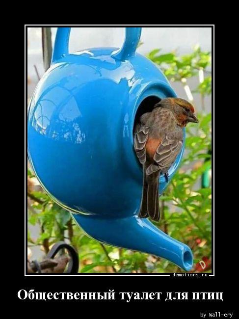 Общественный туалет для птиц