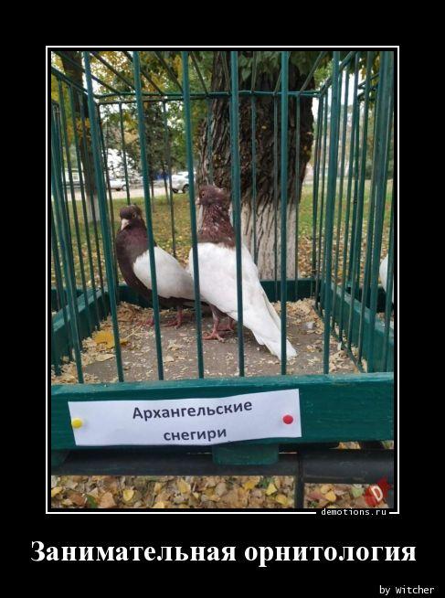 Занимательная орнитология
