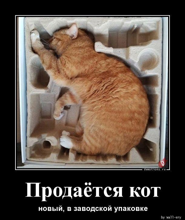 Продаётся кот