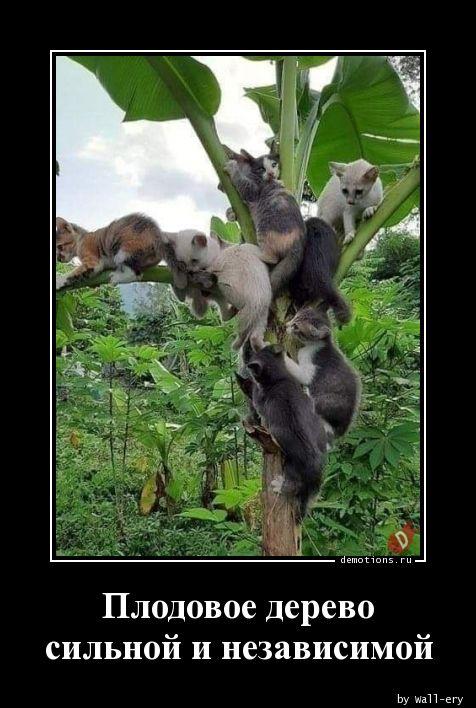Плодовое дерево сильной и независимой