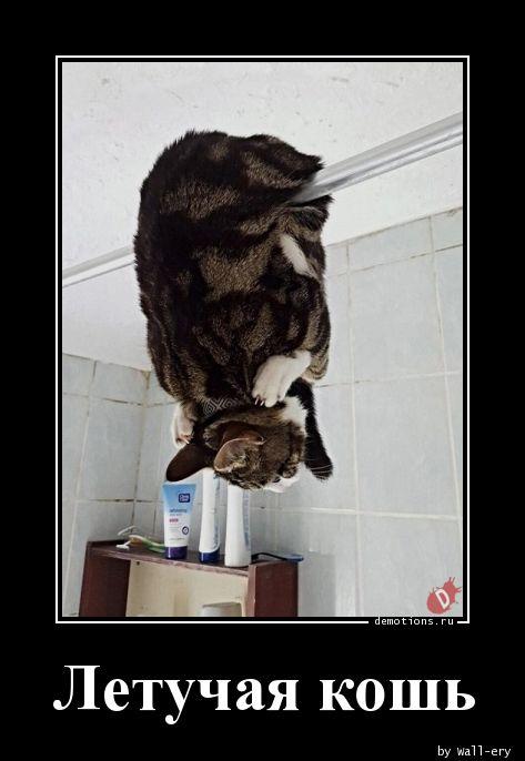 Летучая кошь