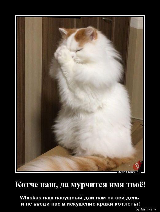 Котче наш, да мурчится имя твоё!