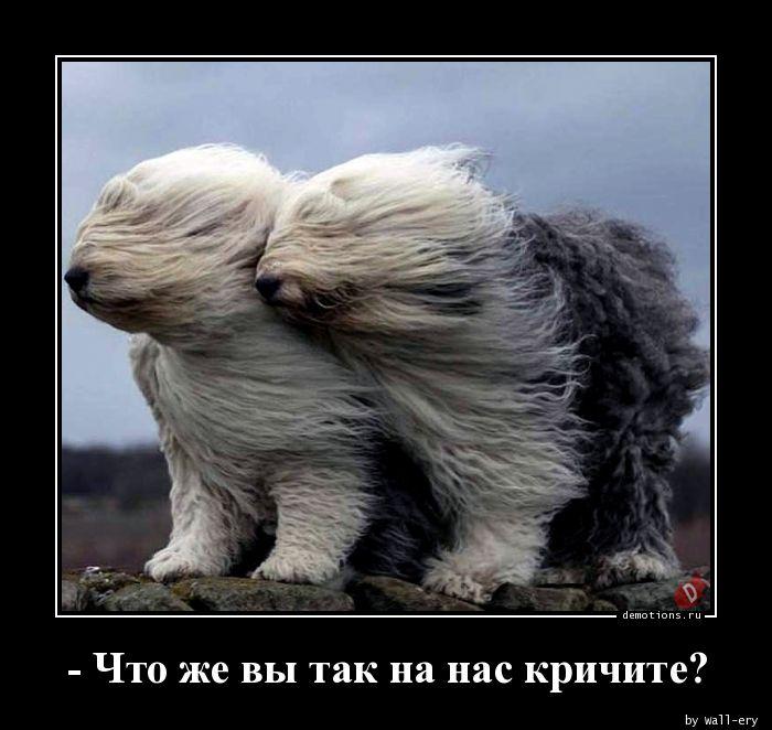 - Что же вы так на нас кричите?