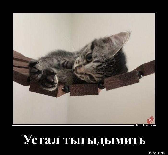 Устал тыгыдымить