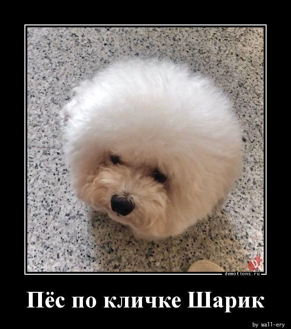 Пёс по кличке Шарик