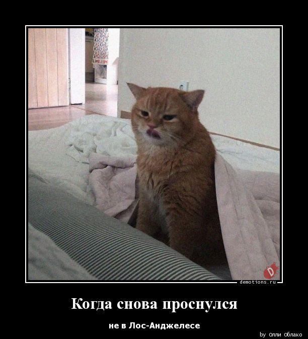 Когда снова проснулся