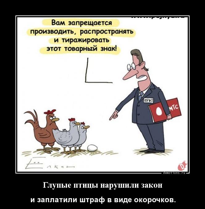 Глупые птицы нарушили закон