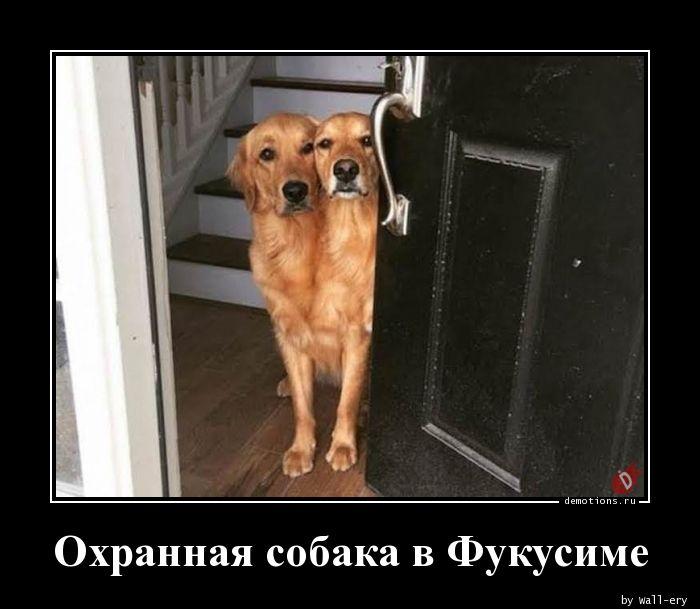 Охранная собака в Фукусиме