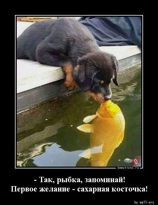 - Так, рыбка, запоминай! Первое желание - сахарная косточка!