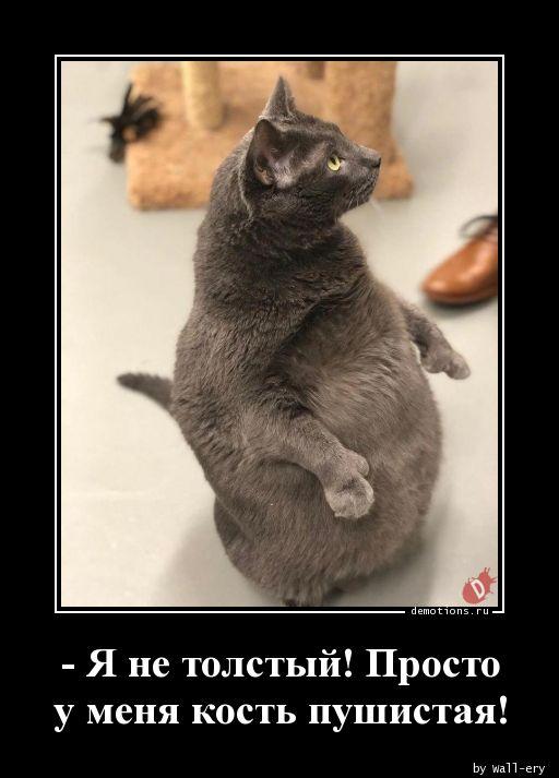 - Я не толстый! Просто у меня кость пушистая!