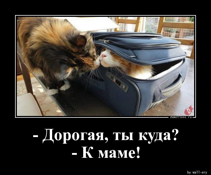 - Дорогая, ты куда? - К маме!