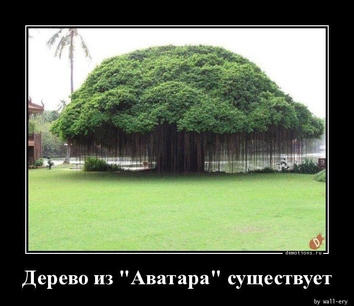 Дерево из