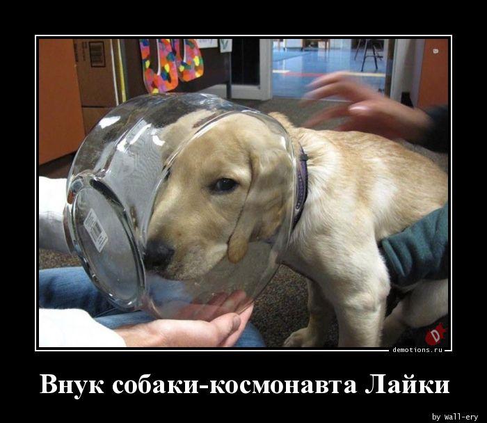 Внук собаки-космонавта Лайки