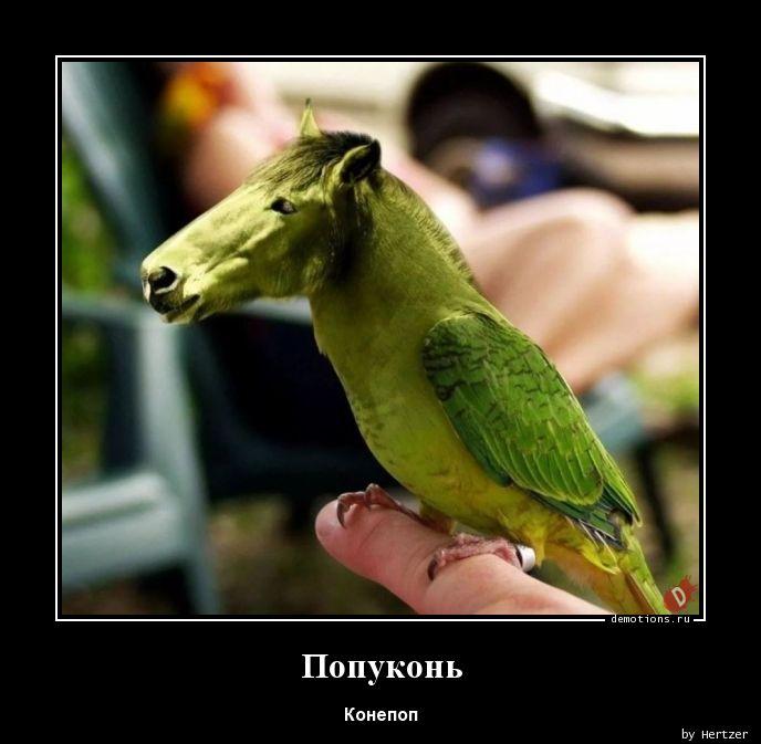 Попуконь