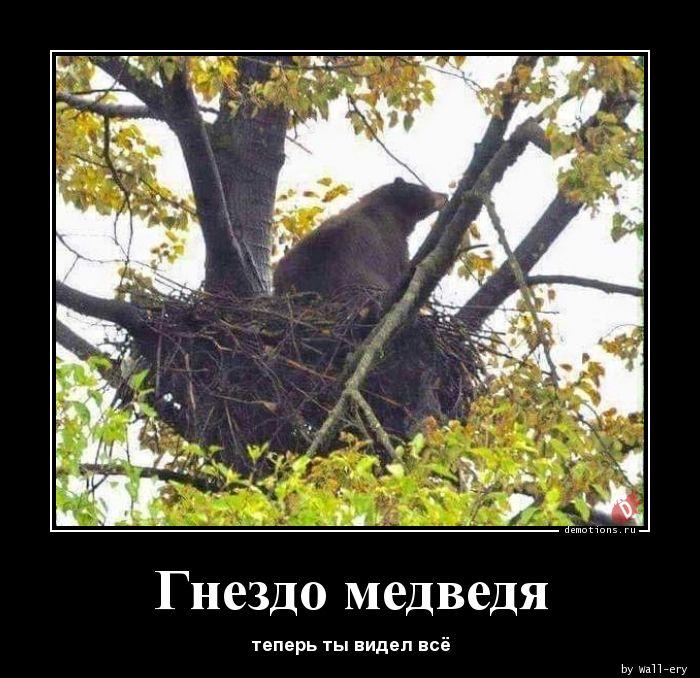Гнездо медведя