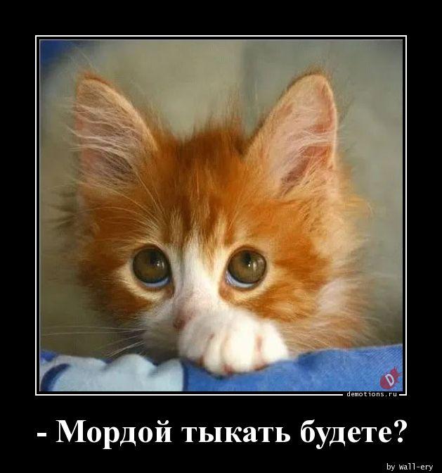 - Мордой тыкать будете?