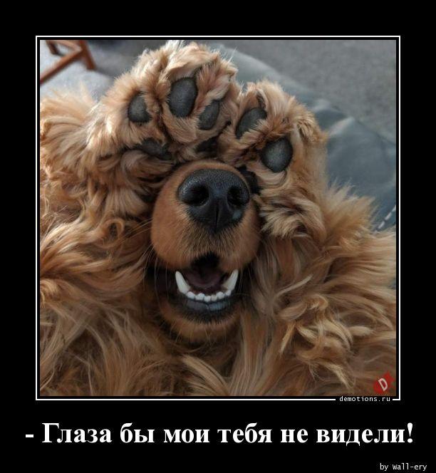 - Глаза бы мои тебя не видели!