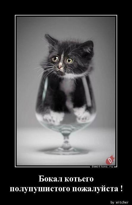 Бокал котьего  полупушистого пожалуйста !