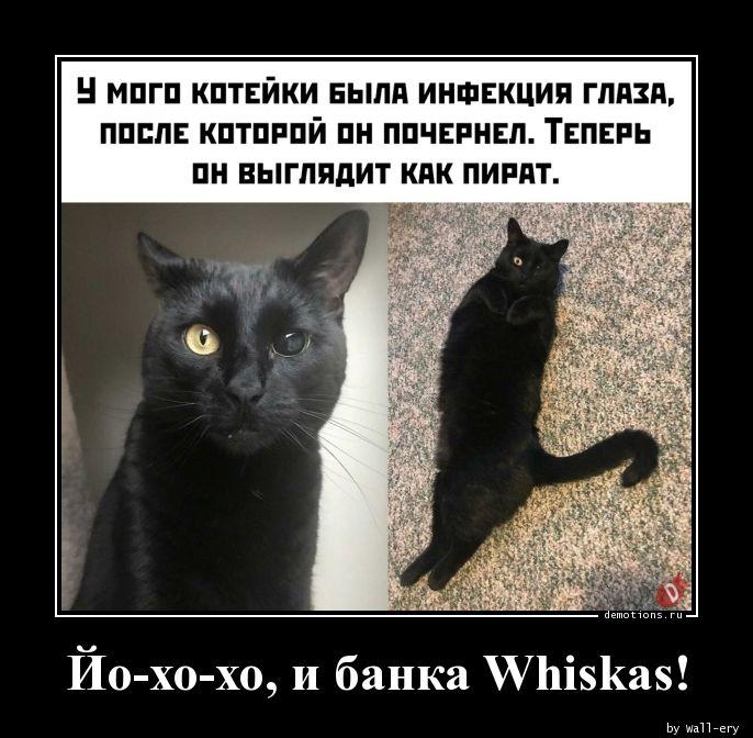 Йо-хо-хо, и банка Whiskas!
