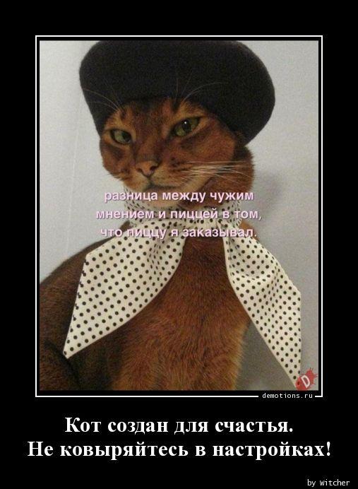Кот создан для счастья.  Не ковыряйтесь в настройках!