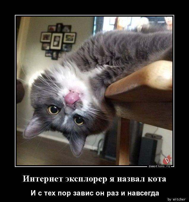Интернет эксплорер я назвал кота