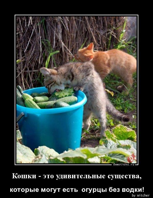 Кошки - это удивительные существа,