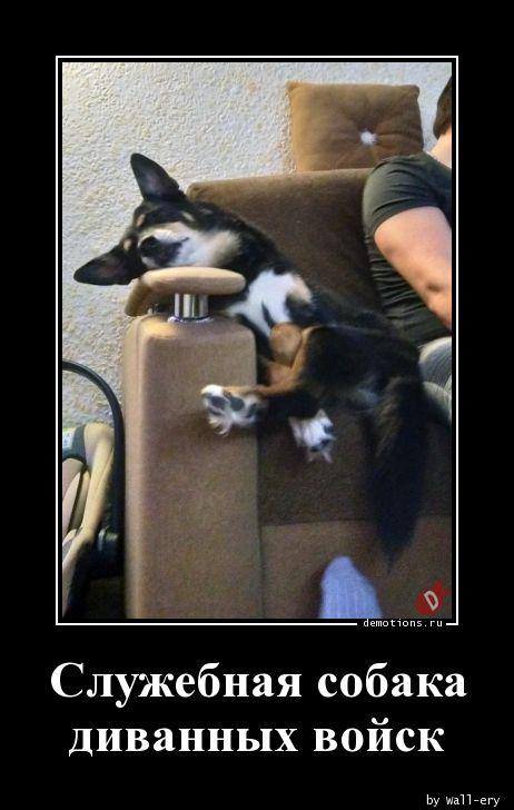 Служебная собака диванных войск