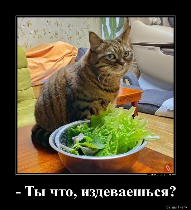 - Ты что, издеваешься?