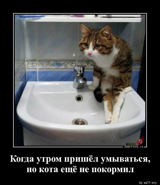 Когда утром пришёл умываться, но кота ещё не покормил