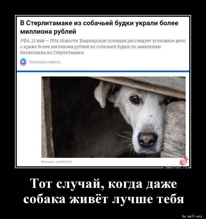 Тот случай, когда даже собака живёт лучше тебя