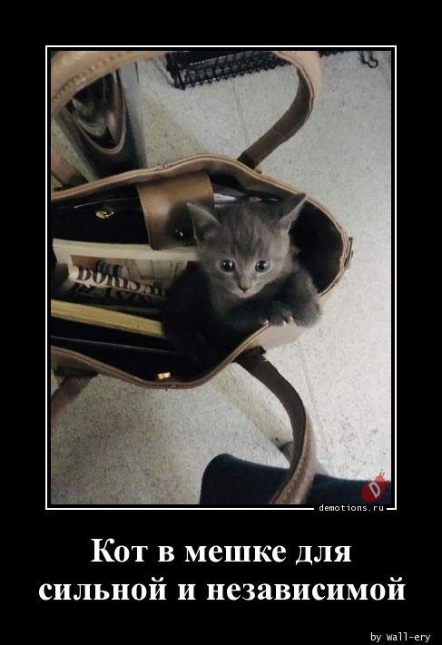 Кот в мешке для сильной и независимой