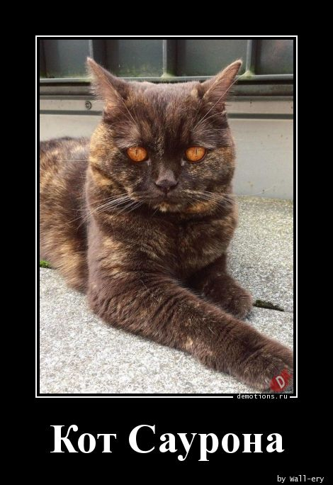 Кот Саурона