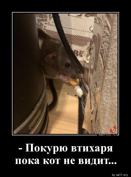 - Покурю втихаря пока кот не видит...