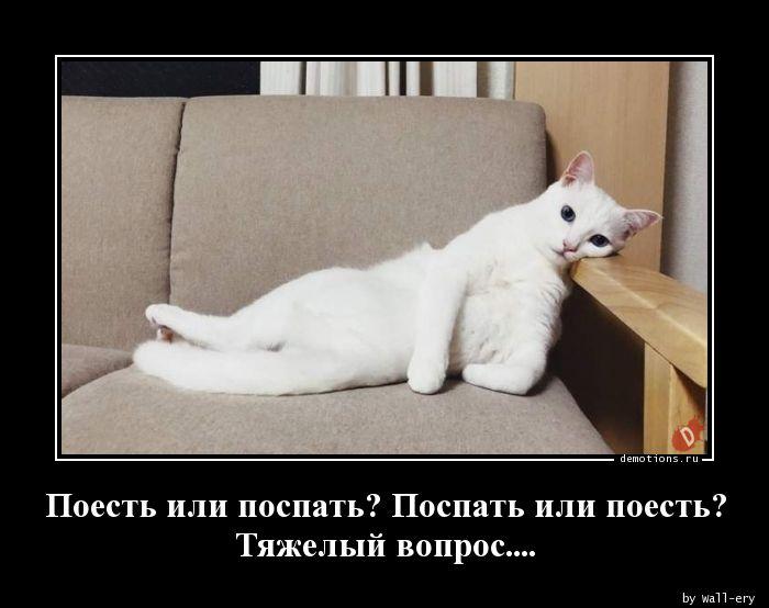 Поесть или поспать? Поспать или поесть? Тяжелый вопрос....