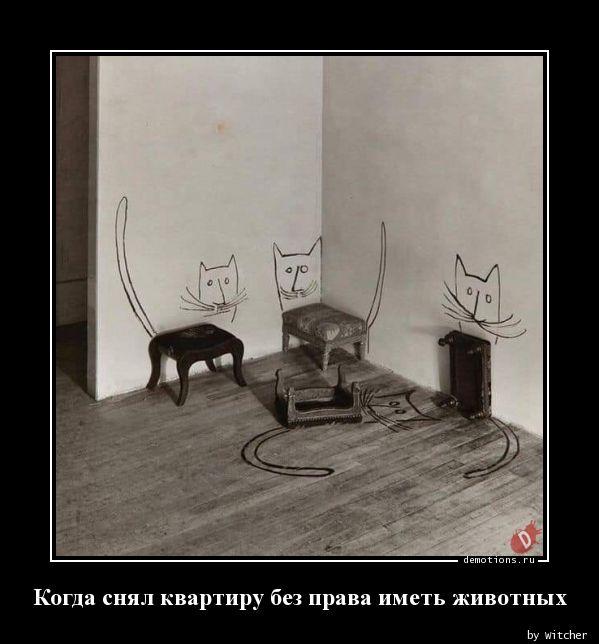 Когда снял квартиру без права иметь животных