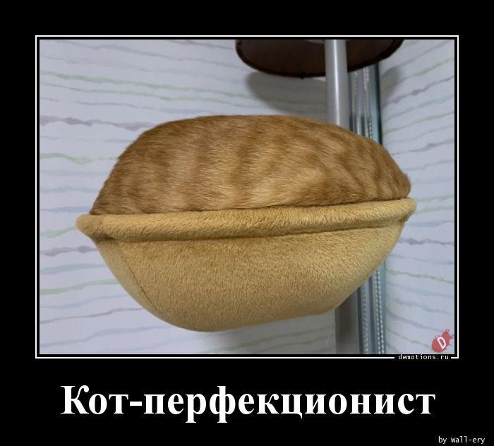 Кот-перфекционист