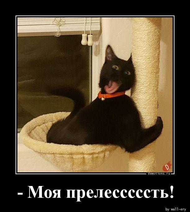 - Моя прелесссссть!