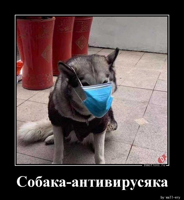 Собака-антивирусяка
