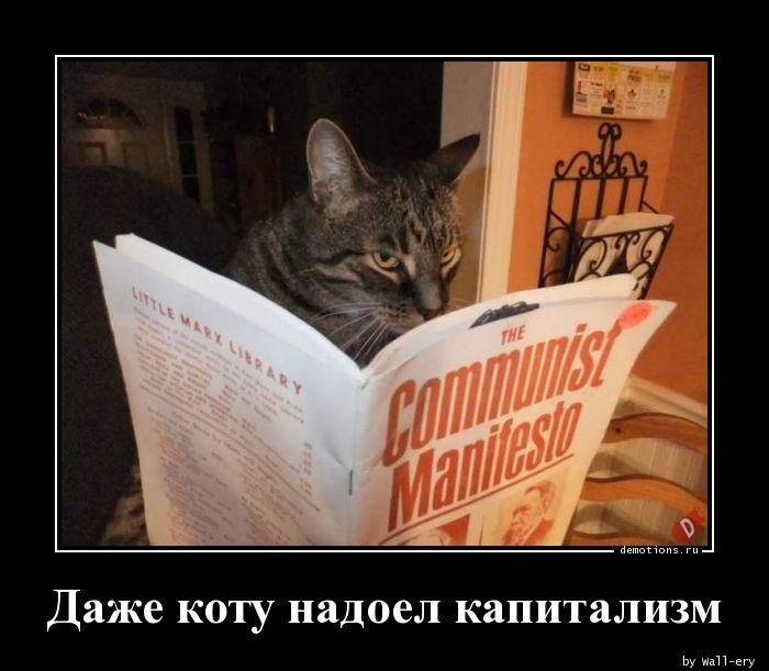 Даже коту надоел капитализм