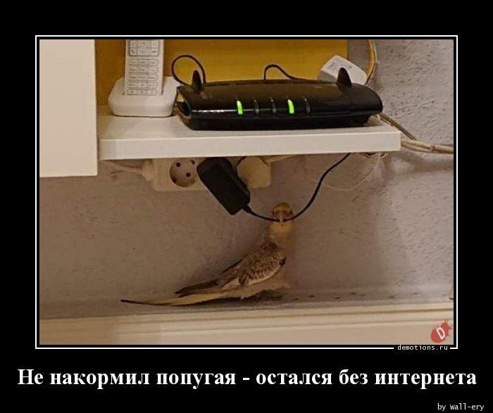 Не накормил попугая - остался без интернета