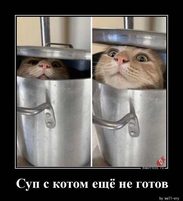 Суп с котом ещё не готов