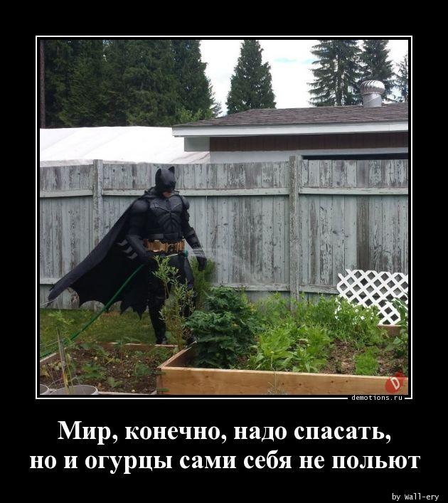 Мир, конечно, надо спасать, но и огурцы сами себя не польют