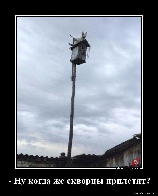 - Ну когда же скворцы прилетят?