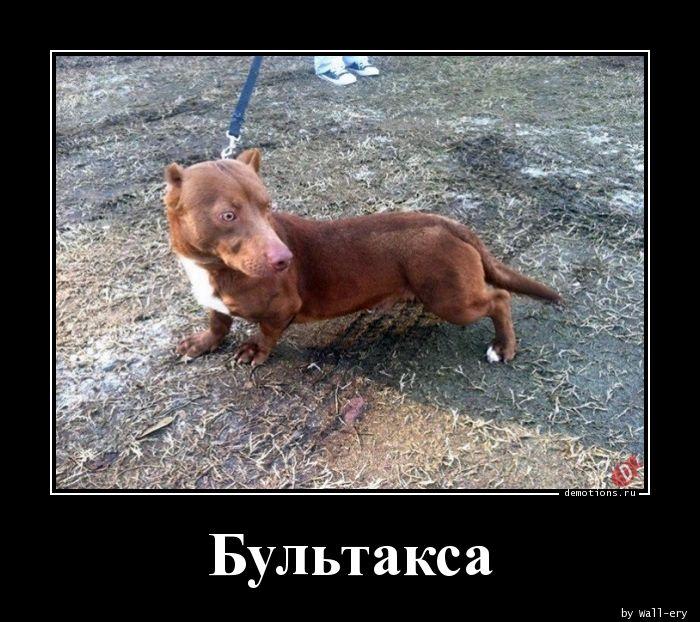 Бультакса